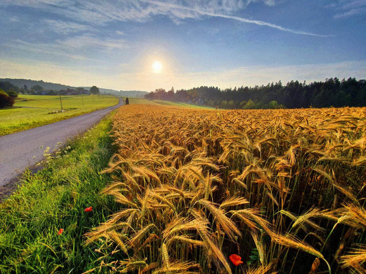 Občina Velike Lašče | Kmetijstvo